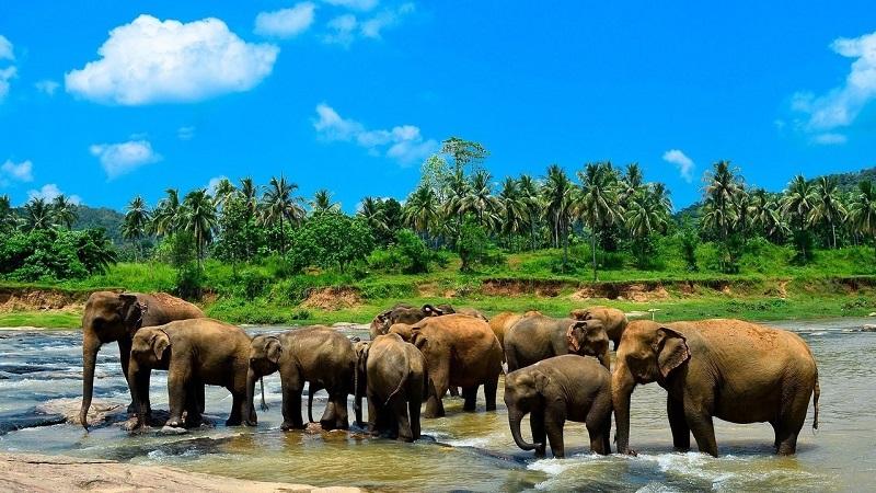 остров Шри-Ланка на карте